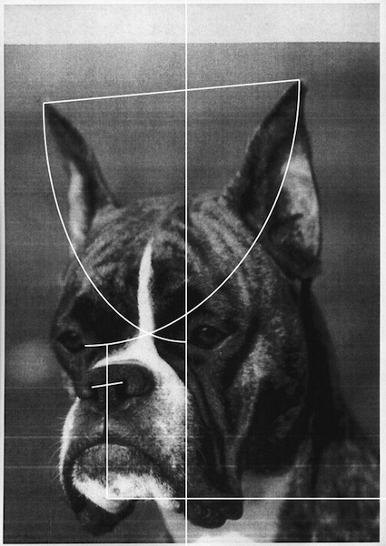 Klara Meinhardt: 
